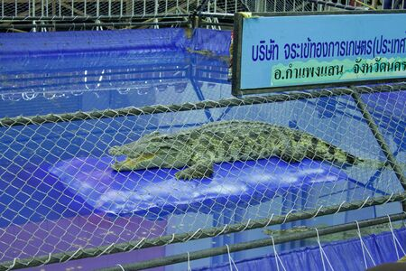 crocodile show Editorial