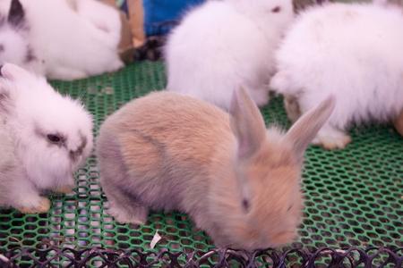 lovely small rabbits Stock Photo