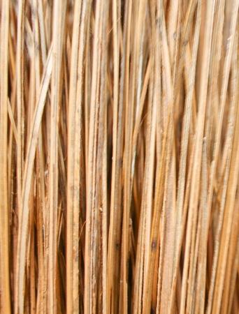 coconut mob pattern