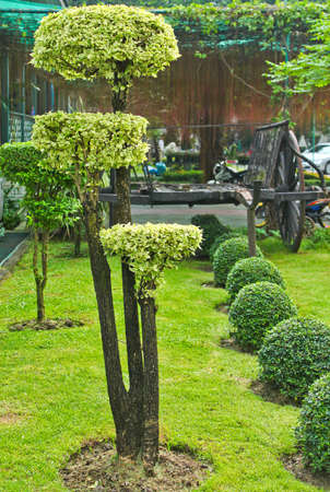 shaping: shaping tree exterior landscape