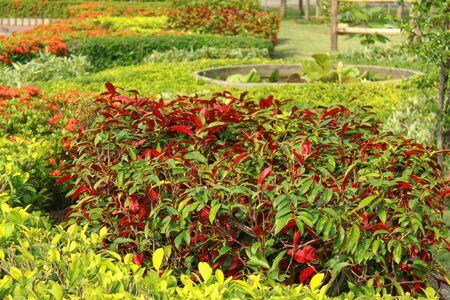 red flower exter landscape Stock Photo - 13859524