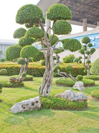 shaping tree Stock Photo - 13898242