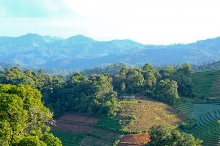 tropical mountain in Thailand