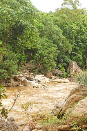 stream in country,tropical forest  Stock Photo