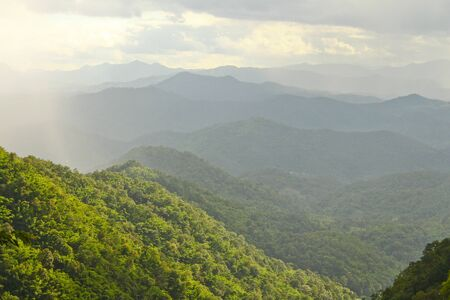 forest in mountain and sky