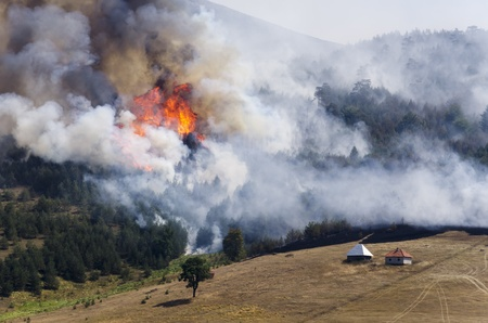 Large fire on Mount Zlatibor  A fire swept through a forest and meadow  Log cabins are in danger  Thick smoke spread  Stock Photo