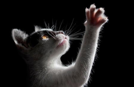 Cat on black background Stock Photo