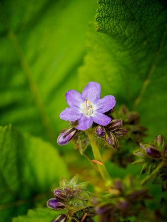 Beautiful spring flowers photo