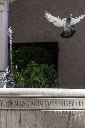 prince of peace: pigeon flying over a water fountain