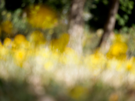 surrealist: Surrealist field of yellow flowers background Stock Photo