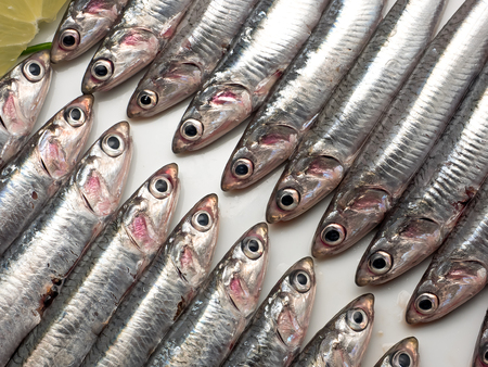 european anchovy: Background texture or pattern. Fresh and raw mediterranean anchovy Stock Photo