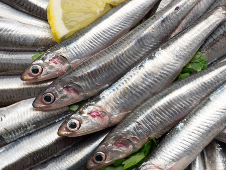 european anchovy: Fresh and raw anchovies close up.