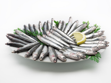 european anchovy: Fresh and raw mediterranean anchovy on white dish