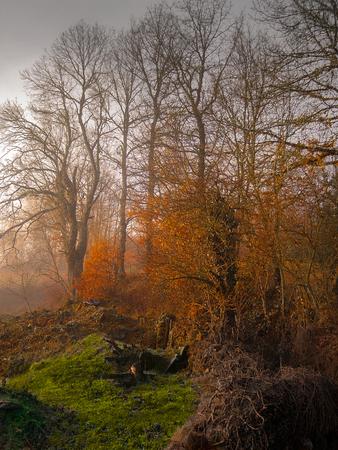 unreal: Autumn landscape unreal Stock Photo