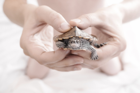 turtle: Hands holding baby turtle. Selective focus