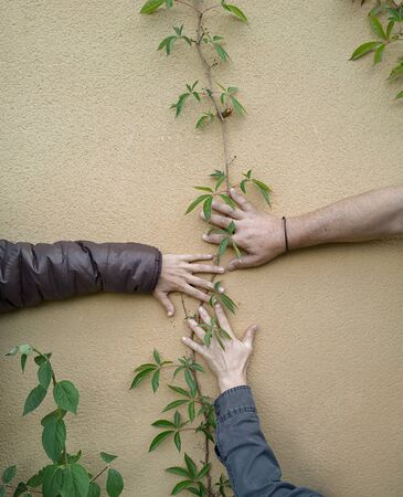 ivy wall: Three hands touching wall decorated with ivy