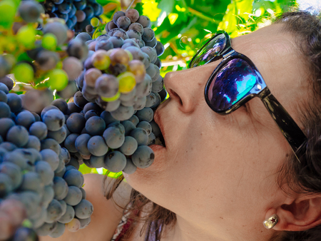 wine grower: Below view of woman biting bunch of grapes during wine harvest