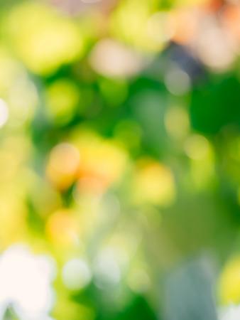 Vineyard blurry defocused background