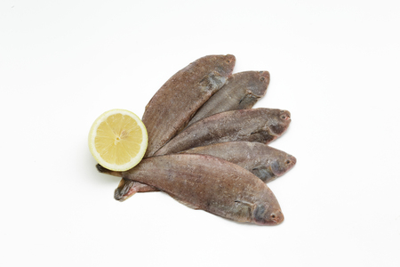 sole: Fresh small sole fishes on white background
