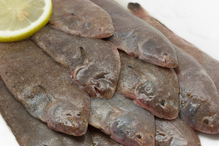 sole: Close up of fresh small sole fishes Stock Photo