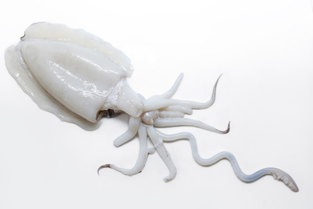 choco: Raw and fresh cuttlefish. Spanish squid Choco