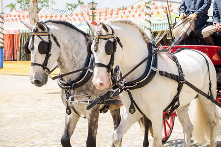 horse drawn carriage: Seville, Spain - April 23, 2015: Horse drawn carriage on the Fair of Seville. The Seville Fair Feria de abril de Sevilla is one of most important celebration of the city, it begins one or two week after easter Holy Week