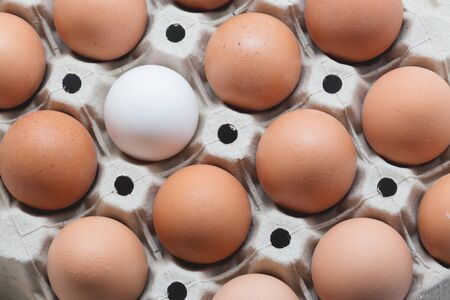 white eggs: Be different. One white egg surrounded by brown eggs in a box. Top view