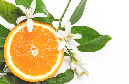 Half Orange Fruit with leaves and blossom isolated on white background