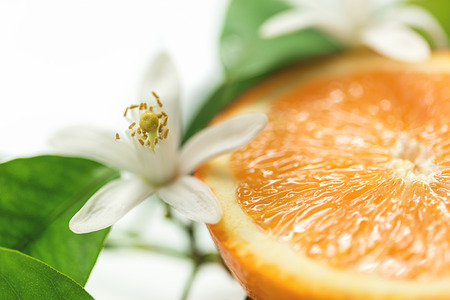 Orange fruit and blossom, Selective focus Stock Photo