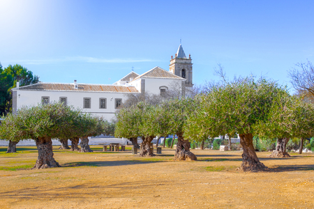 Centenary olive trees and Convent of San Francisco de Asís in Estepa, province of Seville. Standard-Bild - 121821062