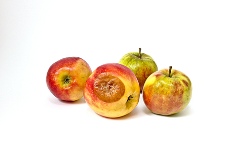 Bad apple with mold among edible apples
