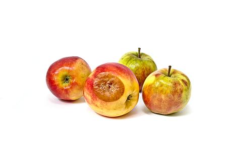 食用のリンゴの中で金型の悪いリンゴ 写真素材