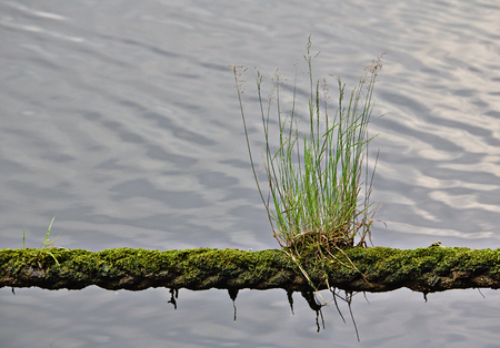 Green grass and moss growing on a mooring line with water in the background