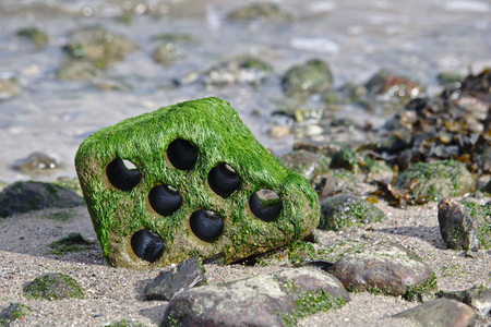 Hollow brick with rounded edges on a rocky beach at low tide covered with green algae