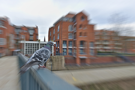Pigeon perched on a handrail with large red brick buildings in the background (radial motion blur) 版權商用圖片 - 90881033