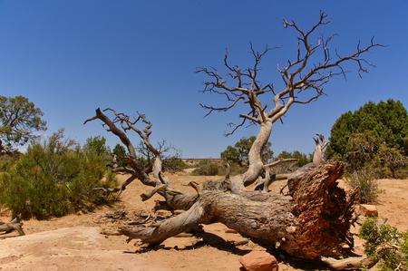 Fallen tree in the desert, Arches National Park, Utah, USA