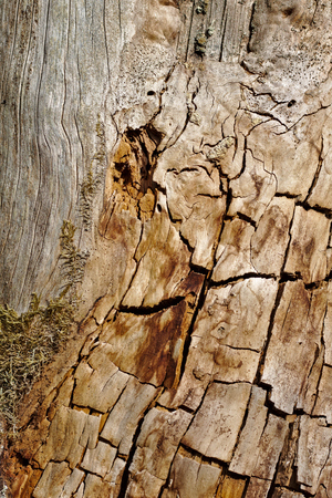 Old tree trunk stripped of its bark with cracks and stains in the evening sun Stock Photo