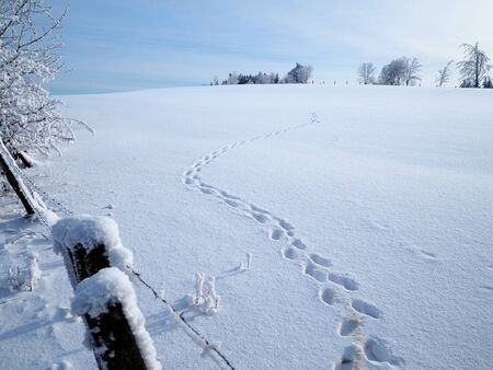 Winding animal tracks leading away across a sunlit field covered with pristine snow