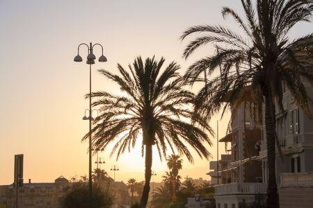 Een palm in het midden van Corso Italia, in Genua tijdens zonsondergang, Stockfoto