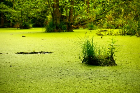 A picture from the lonely swamp deep in the forest.