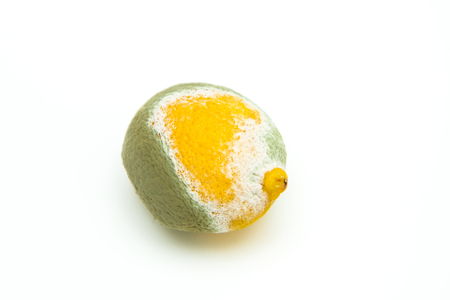A picture of the rotten lemon. It is half fresh yellow and half green covered with mould. Stock Photo