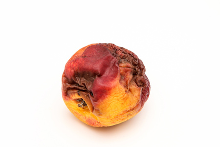 A picture of a rotten nectarine. The shape is deformed and it is inedible. Isolated on white background.