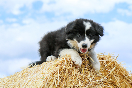 A cute puppy is posing on the hay bale and smiling