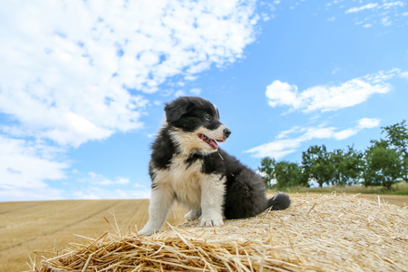 A cute puppy is sitting on the hay bale and smiling