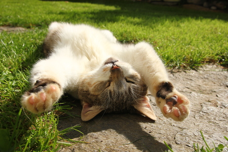 A cat is lying on the grass and enjoying the sun. She is sleeping and dreaming.