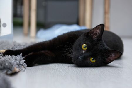 A sleepy kitty is lying on the ground and watching you. Archivio Fotografico - 134425358