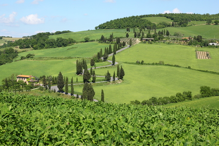 A view from the beautiful tuscan countryside with its cypress alleys and hairpin roads.