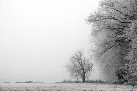 A picture of the edge of a forest during the misty morning in winter. The trees are frozen, the atmosphere is gloomy. Stock fotó