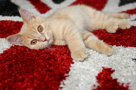 A cute kitten is sleepy and is lying on a carpet.