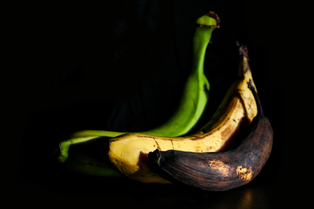 A picture of three ordinary bananas, without modifications..as you know from the shop. The picture shows the maturing of the bananas. One is green, one is yellow and one is overripe. 免版税图像